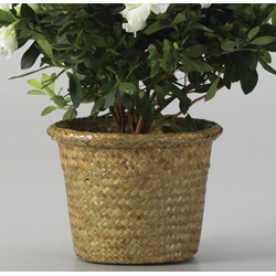 "6.5"" ROLLED RIM POT COVER (1)"