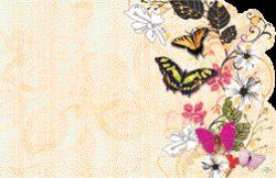 ENCL CARD - BLANK BUTTERFLIES